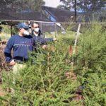Nativos industrializan hierbas medicinales para la venta en los mercados